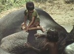 Elephant Boy - image 12