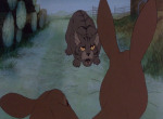 La Garenne de Watership Down - image 3